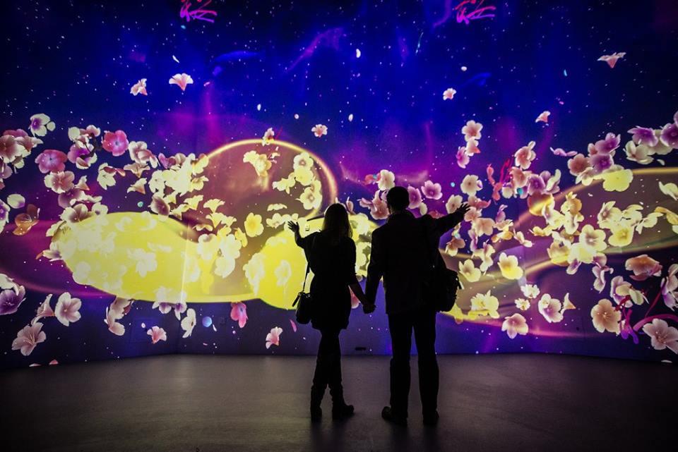 美美DER零時差綻放!全球虛擬櫻花…日本看得到一抹粉紅!