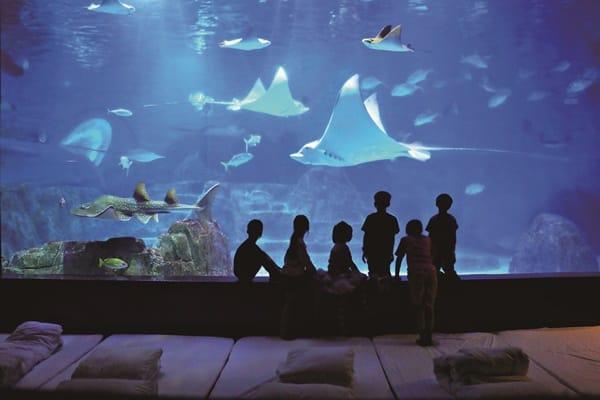 魚兒相伴 兩天一夜親親海洋夜未眠 花蓮 遠雄海洋公園
