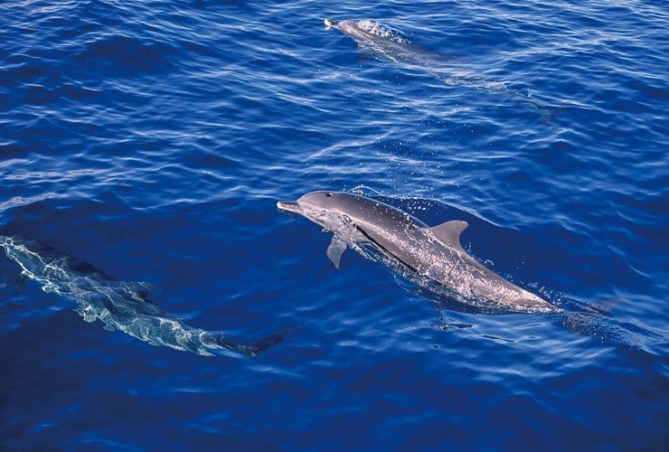 旅人與海──順著黑潮與鯨豚共舞 in 花蓮